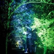 AtexLicht-grondspot-bomen-in-kleur