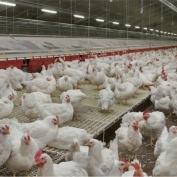 AtexLicht industrie armaturen voor gevogelte stallen