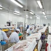 AtexLicht industrie armaturen voor voedsel verwerking